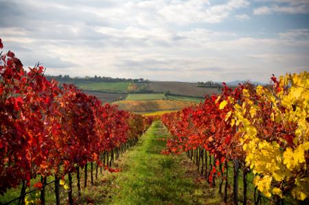 סיורי יין בקליפורניה