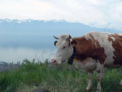 שווייץ – קן הקוקיה