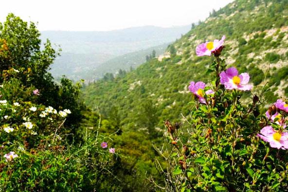 הרי ירושלים: טיול בנחל קטלב