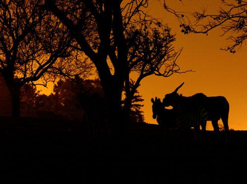 ספארי לילה – מה עושות האיילות בלילות?