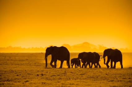 טיול בקניה: טבע חסר גבולות