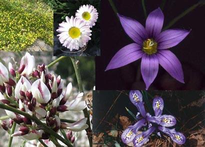 טיולי פריחה: פרחים של חורף