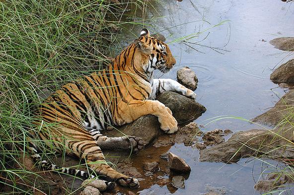 שמורות טבע בהודו: ספר הג'ונגל