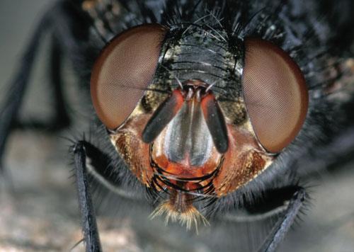 חרקים ופרוקי רגלים: זום