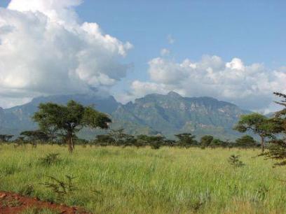 אוגנדה: במורד המפלים, בעקבות הגורילות