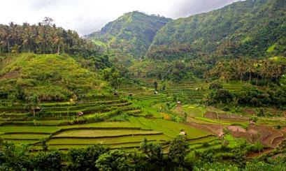 נא להכיר: אינדונזיה
