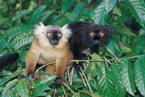 מדגסקר: יחידים במינם