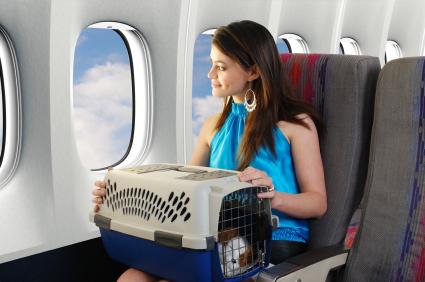 חברת תעופה תתיר חיות מחמד בתא הנוסעים