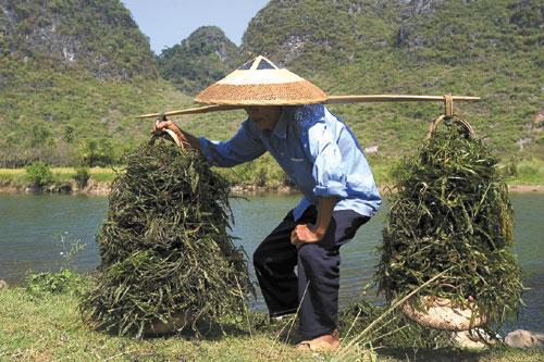 גווילין: סין של החלומות