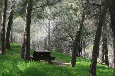 מסלול טיול ביער עמינדב