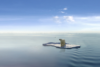 דב חסר בית בקמפיין נוקב נגד קידוחי נפט בקוטב