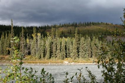 יערות הצפון ויערות הדרום: האם למדו העצים גיאוגרפיה?
