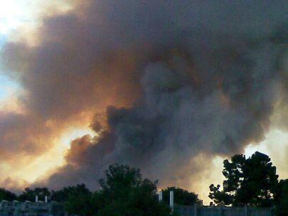 השריפה בכרמל: האש כילתה עשרות סוגי עצים ושיחים