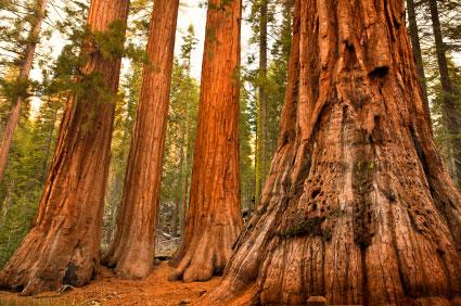 גילם של עצים: בטבעת הזמן