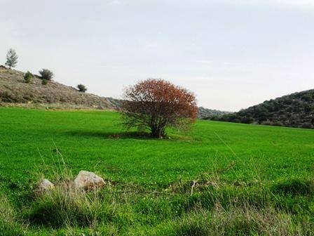 הישג סביבתי: ניצלו שטחים פתוחים בעמק האלה