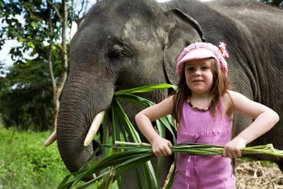 תאילנד – לכבד את הפילים