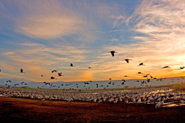 חורף של ציפורים – חגיגה מעופפת