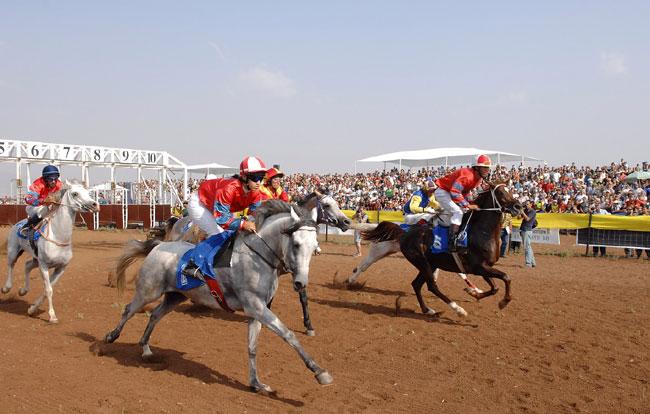 מרוצי סוסים: הימור מסוכן