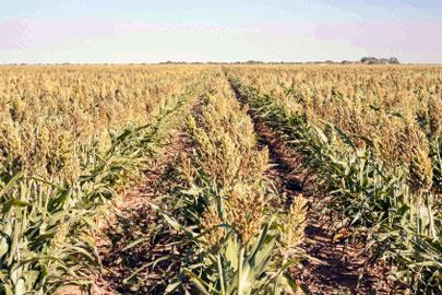 ארצות הברית מתייבשת: הבצורת גורמת לעליית מחירים