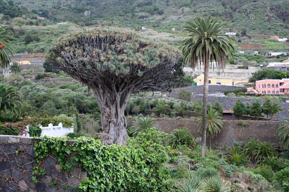 העצים הכי מפורסמים בעולם