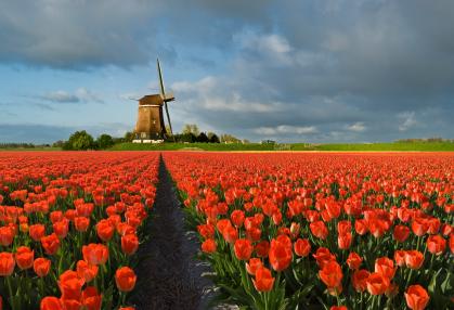 הולנד: דברים שאולי לא ידעתם