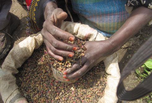 אוכל אתיופי: רזי המטבח של יהדות אתיופיה