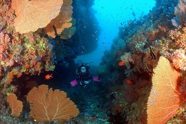 ספארי צלילה באיים המלדיביים