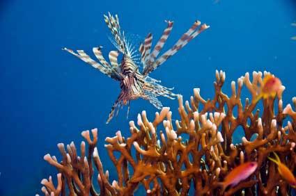 האם האלמוגים מתחילים לחייך?