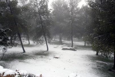 יער יתיר ושמורת הר עמשא בסופת שלגים