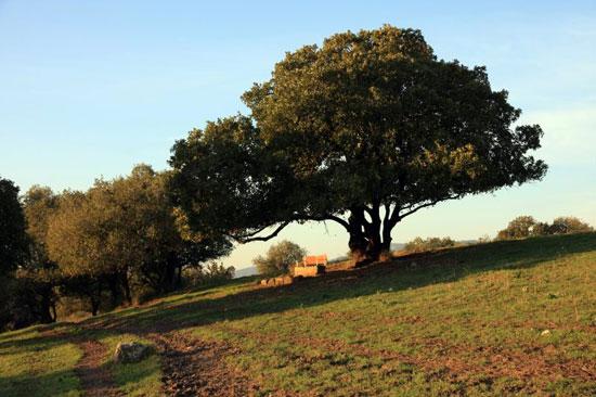 טיול בעקבות עצים: בין אלה ואלון ליד טבעון