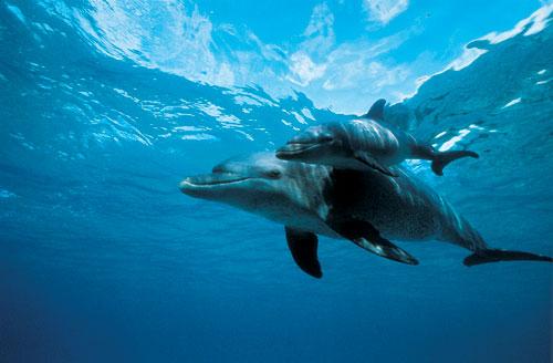 ריף הדולפינים: אהבה תת מימית