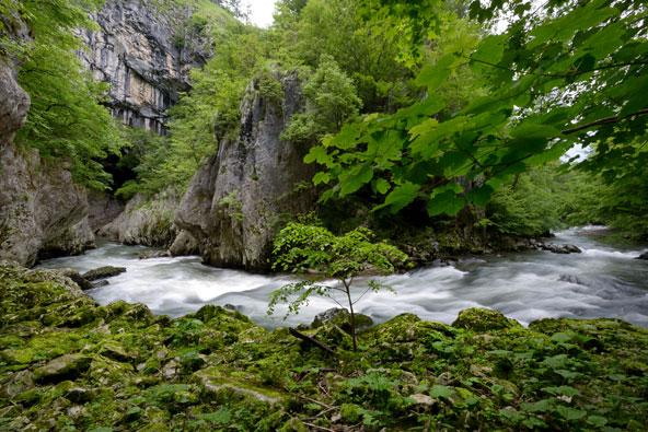סלובניה – הירוק היום ירוק מאוד