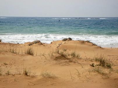 חוף בצת בסכנה: אירוע מחאה