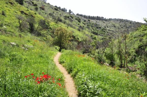 טרקים בישראל: מסלולים מומלצים