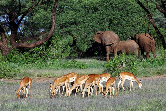 ספארי בטנזניה – דרמה שלא נגמרת