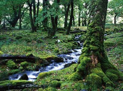 אירלנד – זה כל הקסם