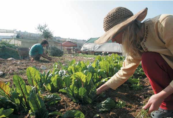 החווה האקולוגית
