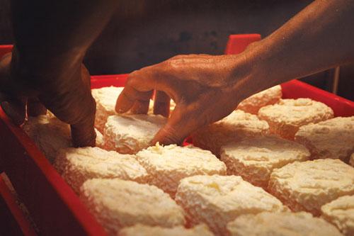ייצור גבינה: שלב אחרי שלב