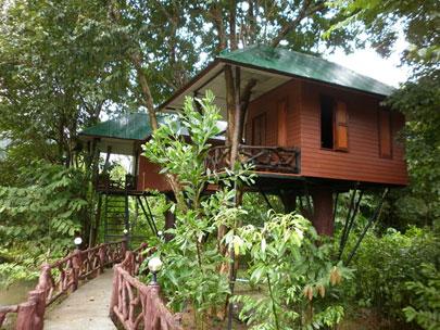 לינה ירוקה בתאילנד