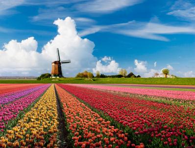 הולנד: בעקבות הפריחה