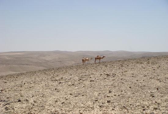 נחל קינה – טיול בדרום מדבר יהודה