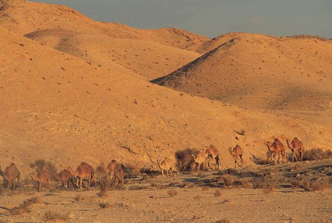 מסע בנגב: לך אל המדבר