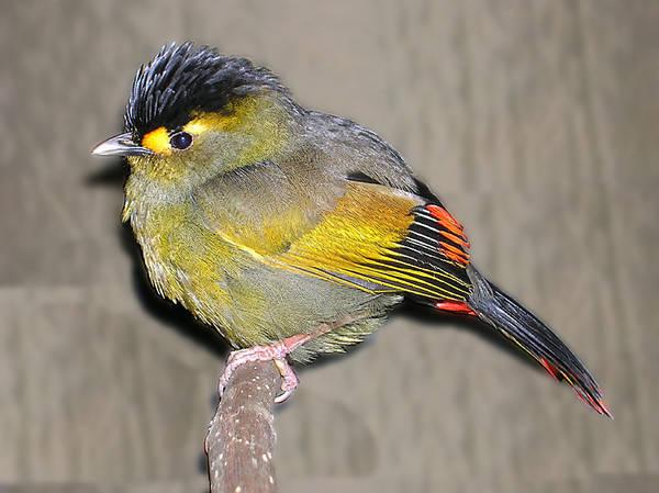 ראיתי ציפור רבת צבע