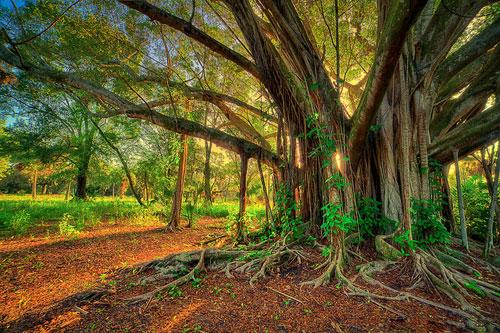 העצים המופלאים בעולם