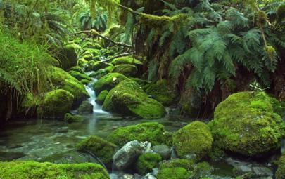 מילפורד, ניו זילנד – השביל היפה בעולם