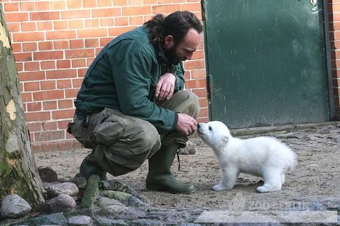 דוב הקוטב קנוט מת בגיל ארבע