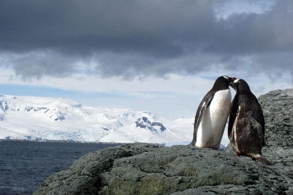 אנטארקטיקה – מסע בלבן