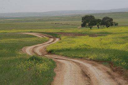 שביל ישראל: הר עמשא – ערד – נחל חמר (מסלול 15)