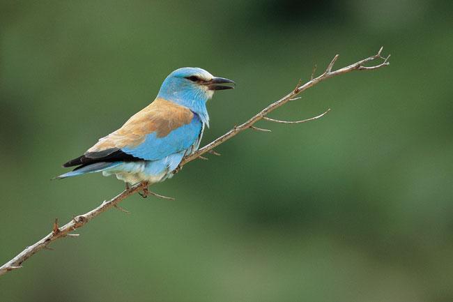 אתרי צפרות בישראל: ראיתי ציפור רבת יופי