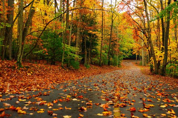 ניו אינגלנד – יערות בוערים